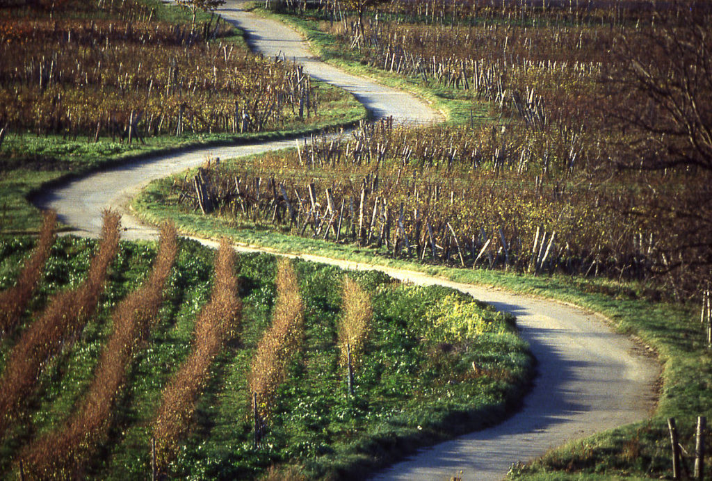 (c) Wein Burgenland. Joachim Lukan