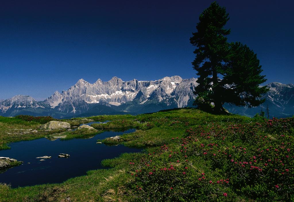 Blick auf das Dachsteinmassiv / von der Reiteralm bei Schladming Steiermark © Österreich Werbung, Fotograf: Lamm